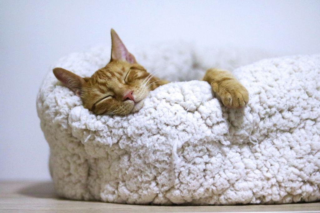 不眠解消!より良いREM(レム)睡眠で朝スッキリ